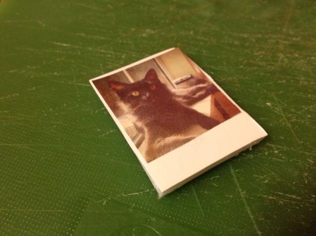 Polaroid cat2